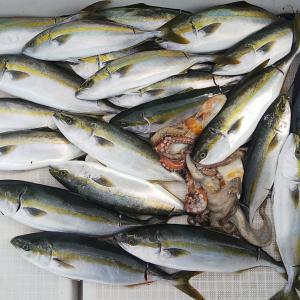 ハマチの大漁は継続?
