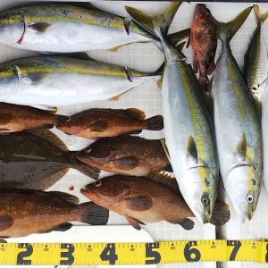 復帰戦で明石の高級魚