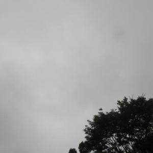 小雨の梅雨空とアカンサス