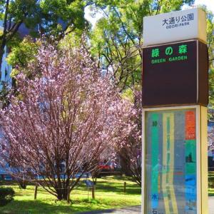 マイチャリドライブ 桜。桜。桃