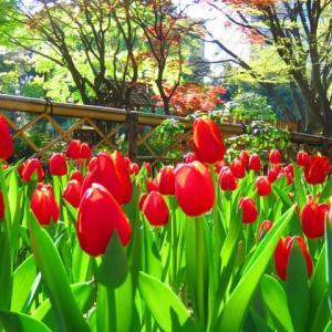横浜公園に行きました
