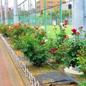 久振りの買い物 岡野公園の薔薇