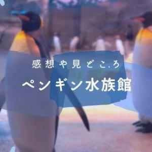 ペンギン水族館は世界で1番ペンギンの種類が多い!感想や見どころをご紹介