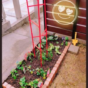 家庭菜園作り
