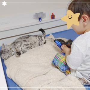 2歳児と猫の日常