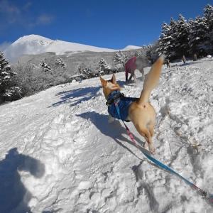 富士山で雪遊び3