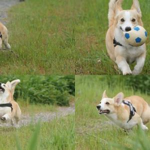 今日も飛行犬の撮影