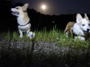 月灯りでお散歩
