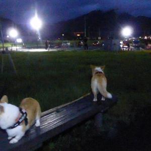 夜の散歩は賑やか?