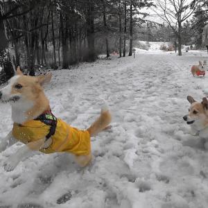 おまつり男は雪もボールも同じ