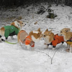 雪の中で楽しく走る
