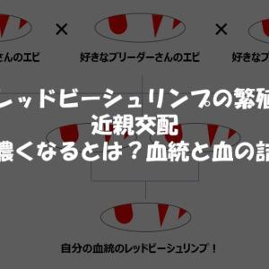 『レッドビーシュリンプの繁殖』近親交配|血が濃くなるとは?血統と血の詰まり