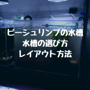 ビーシュリンプの水槽|水槽の選び方やレイアウト方法