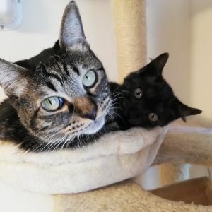 2匹の猫ブログ『くろ&とら』始めました