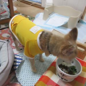 スイカ、食べます。。。(^^♪