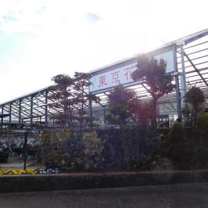 西多摩にある園芸店、「東京花壇」に行ってきました