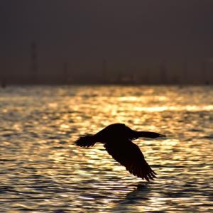 夕焼けと鳥さん