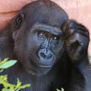 「生物100万種が絶滅の恐れ」というニュースを見て