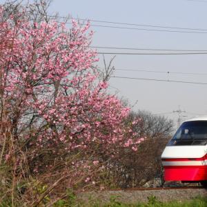 近所の春 ~kinnjyo no haru~