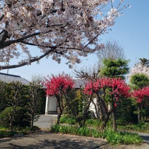 (お散歩)人んちの庭 ~ hito n chino niwa ~