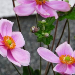 夏から秋の花