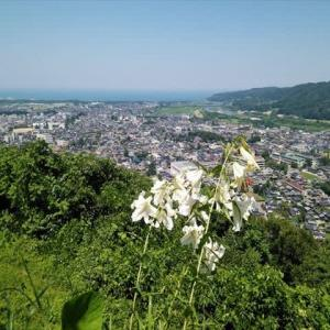 お城山・夏の花