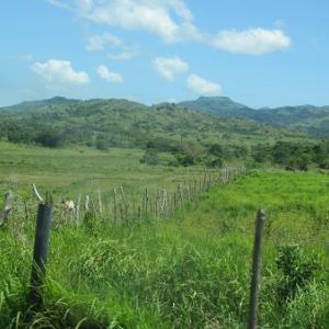 ロデオ牧場(フィリピン・マスバテ島)