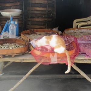 干物屋さん(フィリピン)