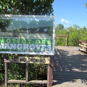 マングローブ公園(フィリピン・マスバテ島)