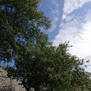 夏と秋の境目、定点観測の梅