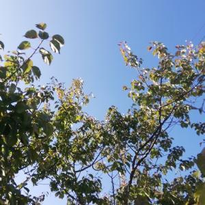 定点観測の梅、紅葉が始まる