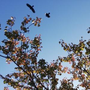 定点観測の梅、終わりの季節に紅葉が進む