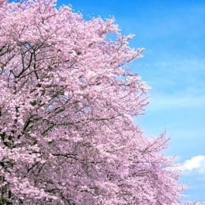 春の太陽は、幸せの太陽♪幸せホルモンが無料でお得♪