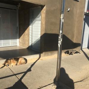 チリの犬達⑩