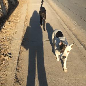 チリの犬達14