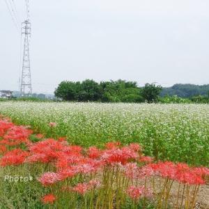 毛呂山町の風景*秋花巡るサイクリングday-5