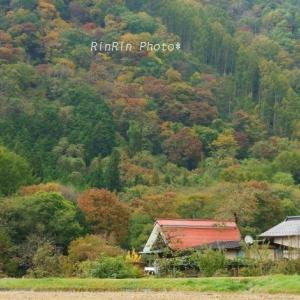 長野県の風景*2019年紅葉巡るドライブ旅-武石村
