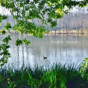 狭山市の風景*初チャリは智光山公園へvol.3