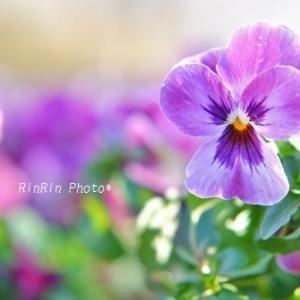 狭山市の花*初チャリは智光山公園へvol.5