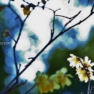所沢市の花*思い出写真in所沢航空記念公園
