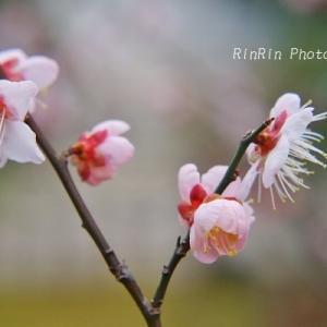 飯能市の花*家チカで冬の花散歩No.5