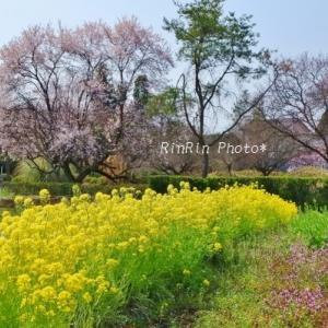日高市の風景*春の花チャリ散歩#4