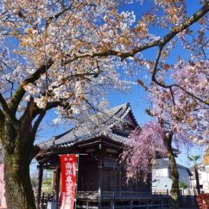 飯能市の風景*家チカ桜を巡るNo.1