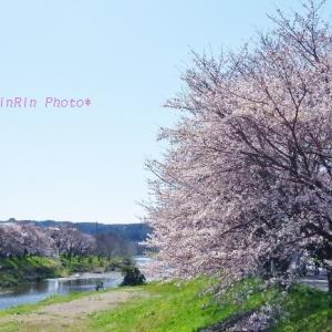 飯能市の風景*家チカ桜を巡るNo.2