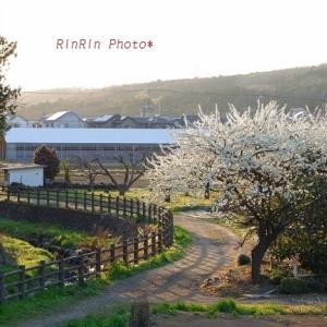 飯能市の風景*春チャリ散歩の夕方-その2