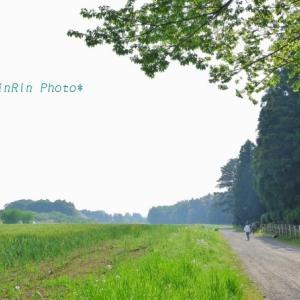 飯能市の風景*朝時間で花チャリ散歩No.3