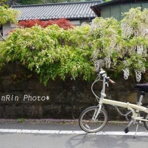 飯能市の花*朝時間で花チャリ散歩No.5