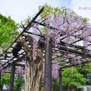 飯能市の花*朝時間で花チャリ散歩No.6