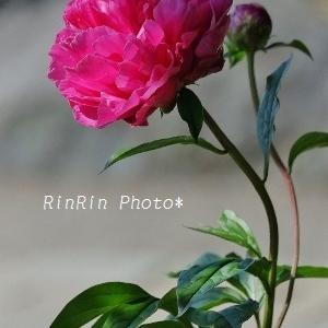 飯能市の花*花を訪ねるチャリ散歩No.1