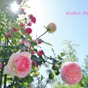 飯能市の花*花を訪ねるチャリ散歩No.2